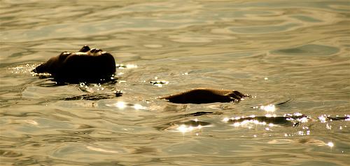 Enjoying a dip in the Hot Spring of Batangas