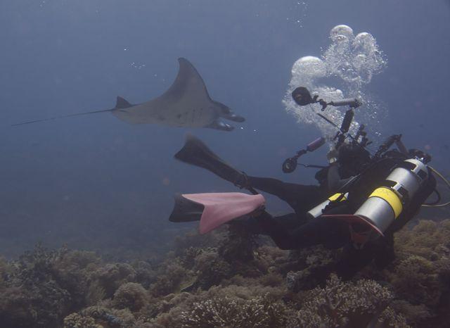 Chasing the Manta at Tubbataha Reef