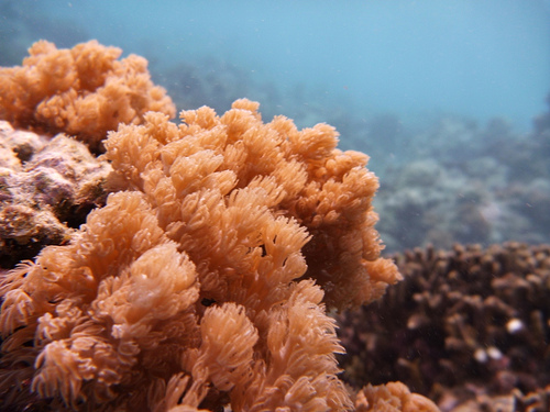 Coral Reef in Romblon