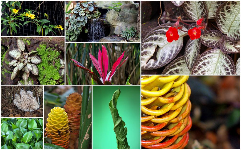 Various Flora & Fauna