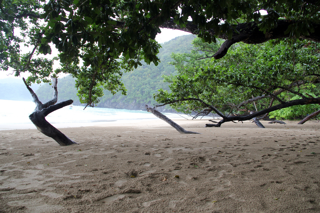 Daplac Cove with the Talisay trees