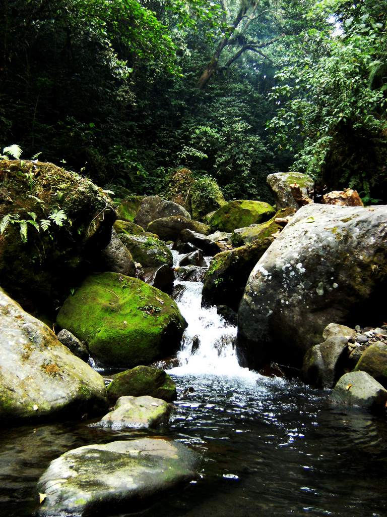 Streams in Mt. Banahaw
