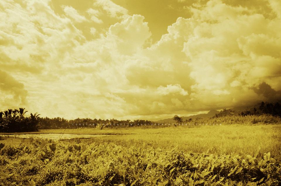 Ricefield in Kiamba, Sarangani