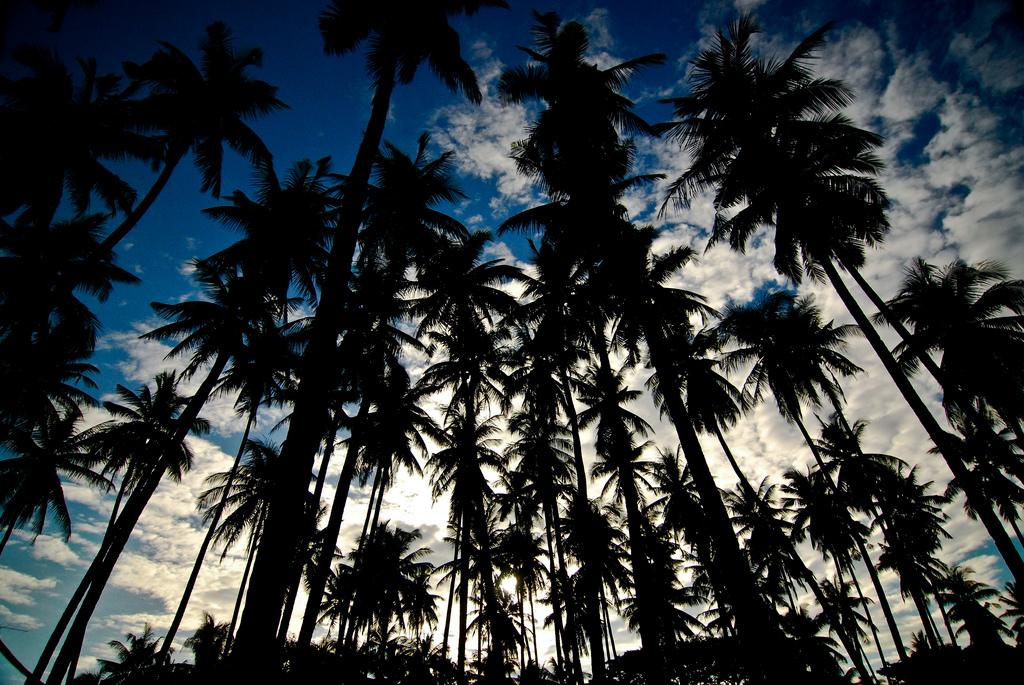 Zamboangita, Negros Orienta by kalamayan/Creative Commons