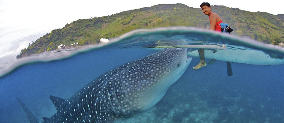 top tourist attractions of oslob cebu trip the islands travel  oslob whale shark watching photo by oslobwhalesharks com