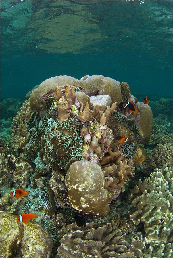 Clownfish City Photo by: stevedeneef.photoshelter.com