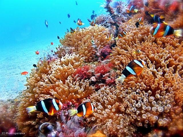 The flora and fauna under the sea are bursting with colors Photo by: phoenixperience.blogspot.com
