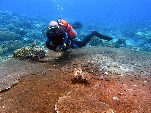 Punta Diwata Reef, Carmen Image source: Francis Ben Taglucop/creative commons