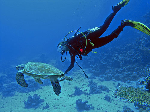 Diving with sea turtle at Moalboal Image source: www.tipoloresort.com