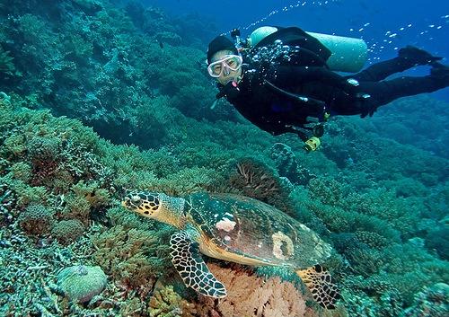 Diving Tubbataha Reef Image source: orientalflowers.wordpress.com/Creative Commons