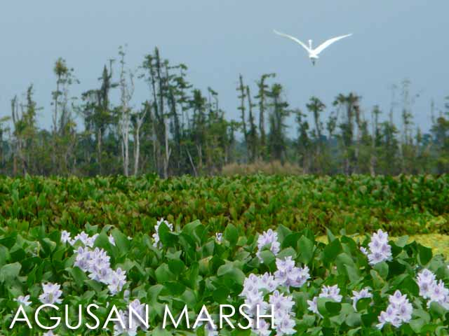 Agusan Marsh Image source: nup.org.ph