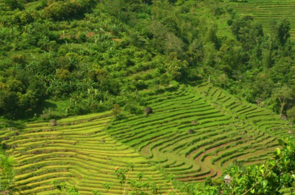 San Carlos Rice Terraces Image source: tourismsancarloscitynegocc.wordpress.com