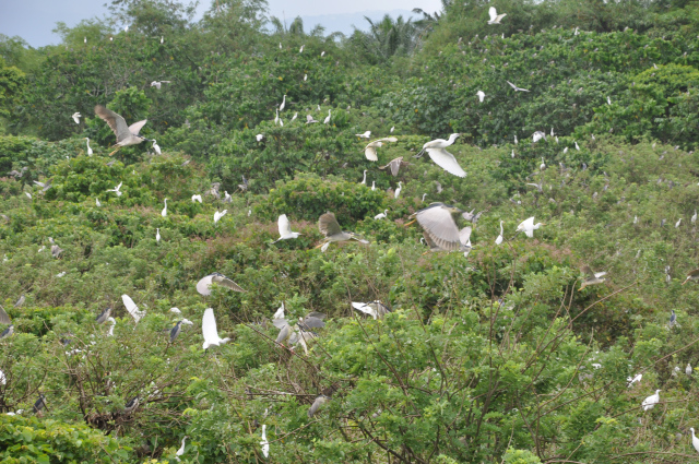 Baras Bird Sanctuary Image source: tacurongcity.net