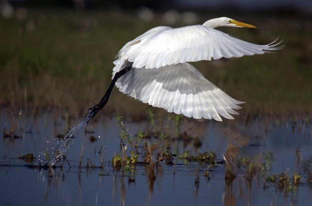 Egret Photo source: pixabay.com