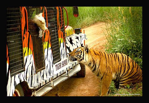 Zoobic Safari Photo by: danny O. of Flickr.com/CC