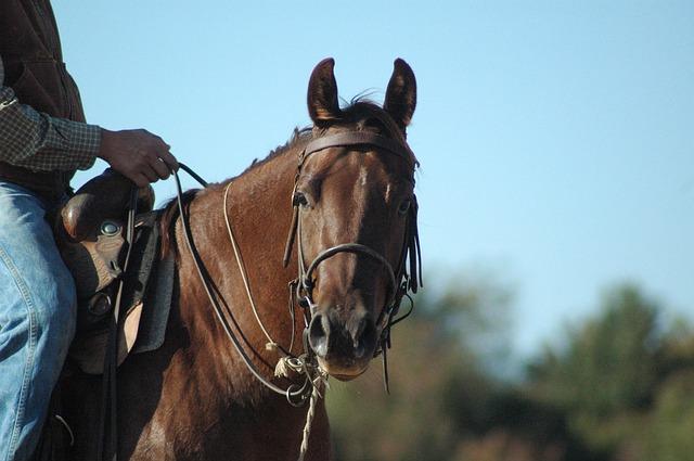 horse-920456_640