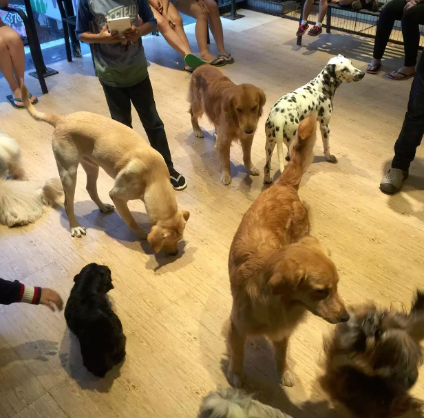 Barkin' Blends Dog Café Photo by: barkinblends.com
